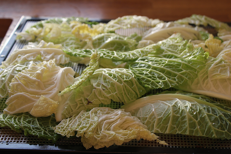 raw-cabbage